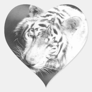 Tigre blanco 2 etiqueta