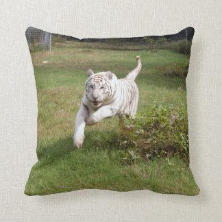 Tigre blanco 3825e cojines