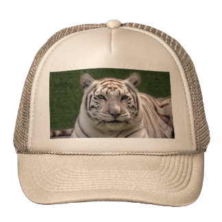 Tigre blanco 3949e gorras