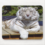 Tigre blanco 9 Mousepad