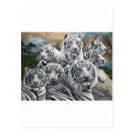tigre blanco alto res tarjetas postales
