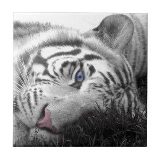 Tigre blanco azulejo cuadrado pequeño