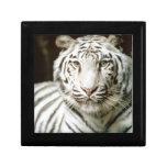 Tigre blanco cajas de recuerdo