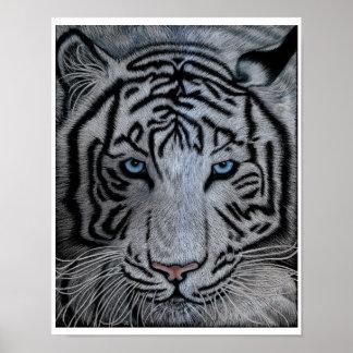 Tigre blanco - Casper Póster