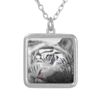 Tigre blanco collar personalizado