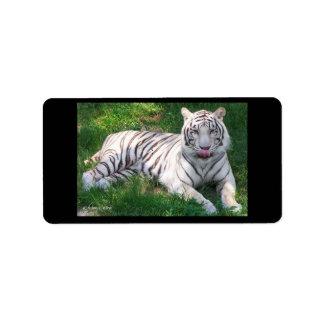 Tigre blanco con los ojos azules que lame la nariz etiquetas de dirección