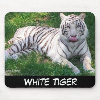 Tigre blanco con los ojos azules que lame la nariz alfombrillas de raton