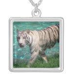 Tigre blanco contra la fotografía que camina del a collares