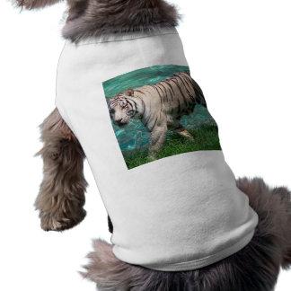 Tigre blanco contra la fotografía que camina del a playera sin mangas para perro