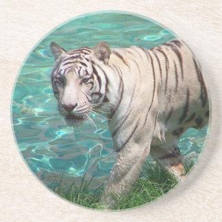 Tigre blanco contra la fotografía que camina del a posavasos de arenisca