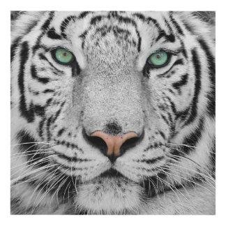 Tigre blanco cuadro