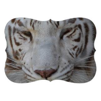 Tigre blanco dulce