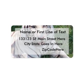 Tigre blanco en imagen vertical del marco de la hi etiquetas de dirección