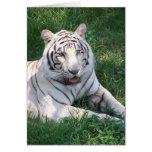 Tigre blanco en imagen vertical del marco de la hi felicitación