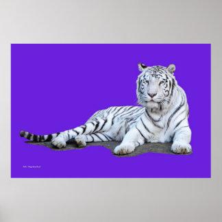 Tigre blanco en púrpura póster