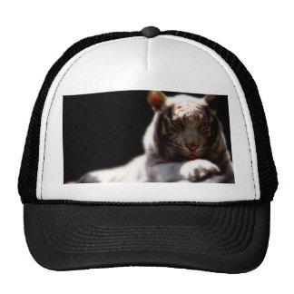 Tigre blanco gorra