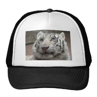Tigre blanco gorras