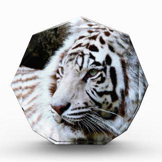 Tigre blanco hecho frente dulce
