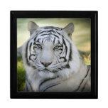 Tigre blanco hermoso (v2) cajas de recuerdo