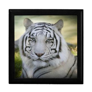 Tigre blanco hermoso (v2) joyero cuadrado grande