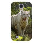 Tigre blanco i