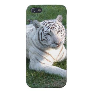 Tigre blanco i iPhone 5 carcasa
