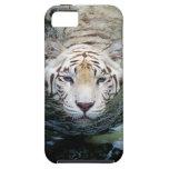 tigre blanco iPhone 5 funda