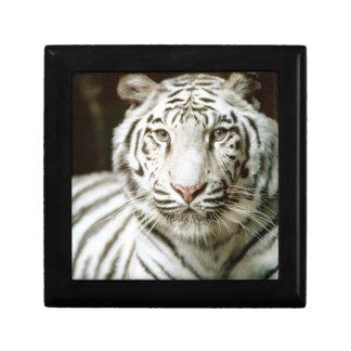 Tigre blanco joyero cuadrado pequeño