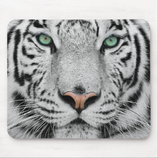 Tigre blanco mouse pads