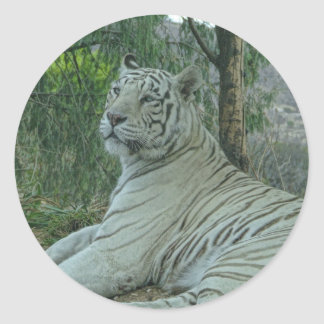 Tigre blanco etiqueta redonda
