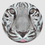 Tigre blanco pegatina redonda
