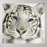 Tigre blanco poster