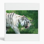 Tigre blanco que camina por Susan L pantano