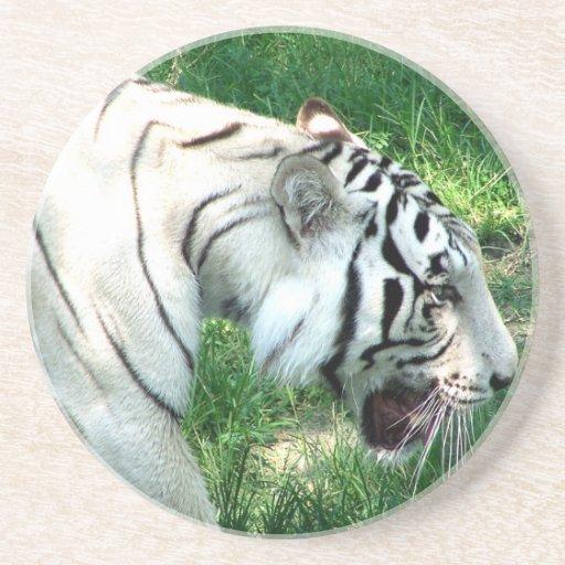Tigre blanco que camina por Susan L pantano Posavasos Diseño