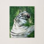 Tigre blanco que camina por Susan L pantano Puzzle Con Fotos