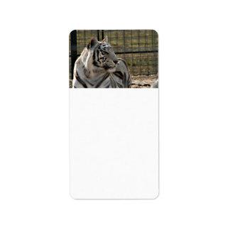 tigre blanco que mira imagen animal correcta etiquetas de dirección