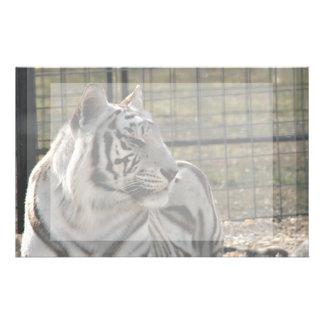 tigre blanco que mira imagen animal correcta papelería de diseño