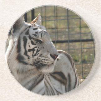 tigre blanco que mira imagen animal correcta posavasos manualidades