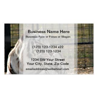 tigre blanco que mira imagen animal correcta tarjetas de visita