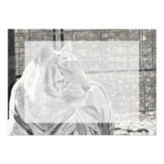 tigre blanco que mira la chispa correcta del bw