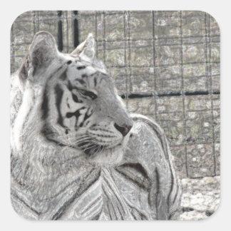 tigre blanco que mira la chispa correcta del bw pegatina cuadradas