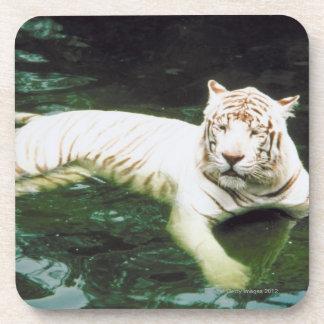 Tigre blanco que nada pacífico posavasos de bebidas