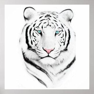 Tigre blanco siberiano póster