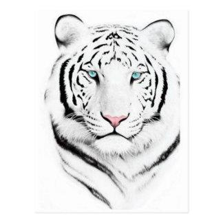 Tigre blanco siberiano postal