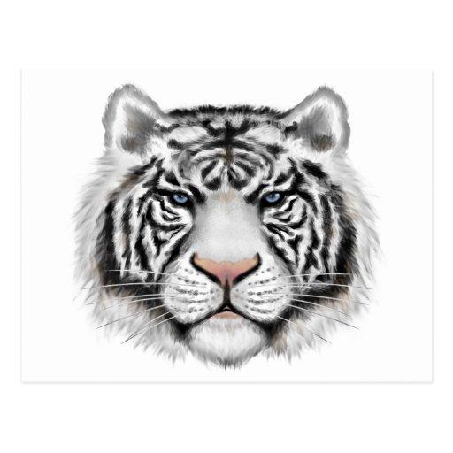 Tigre blanco siberiano tarjeta postal