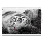 Tigre blanco tarjeta de felicitación