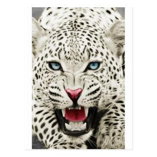 tigre blanco postal