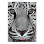 Tigre blanco tarjetas
