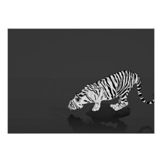 Tigre blanco y negro póster