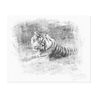 Tigre bosquejado de Sumatra Impresiones En Lienzo Estiradas